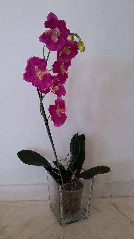 Orquidea Palomatrends